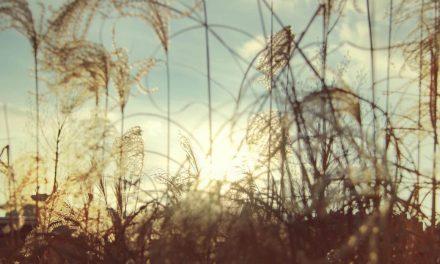 27 middelen ter genezing van de geestelijke ziekten en debenauwdheidvan het hart