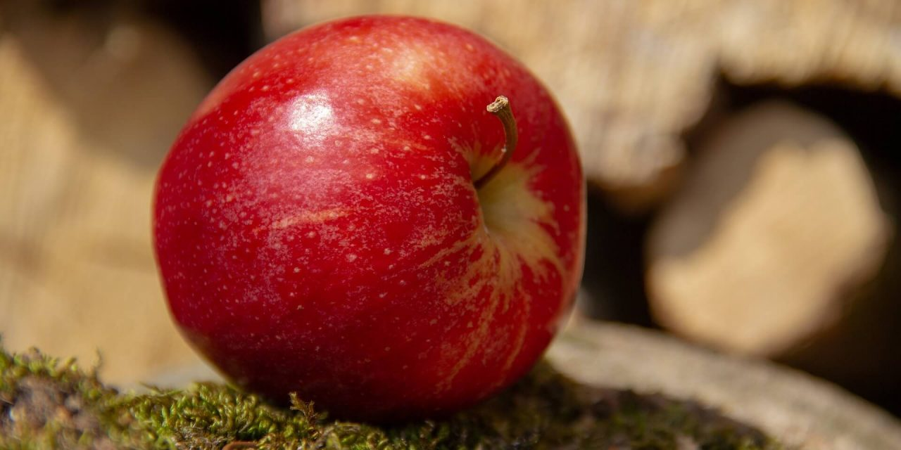 Verboden vrucht